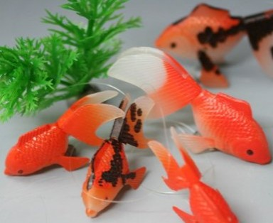 エサのいらない金魚と水草セット